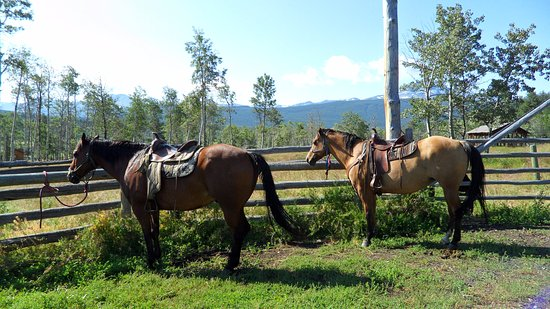Elkin Creek Guest Ranch: Beautiful horses