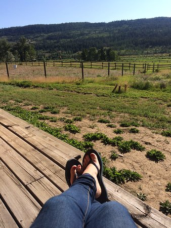 Elkin Creek Guest Ranch: Room with a view