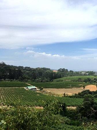 Constantia, South Africa: View