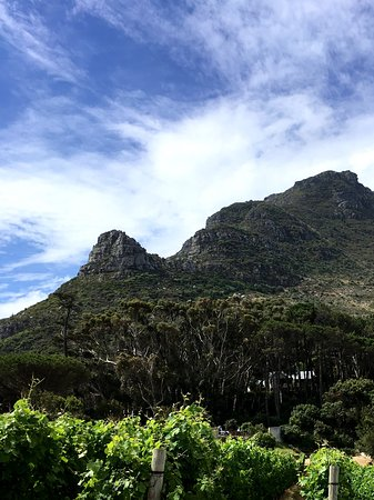 Constantia, Sør-Afrika: Vineyard