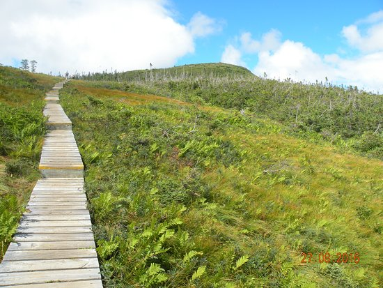 Woody Point, Canada: Further down the back boardwalk.