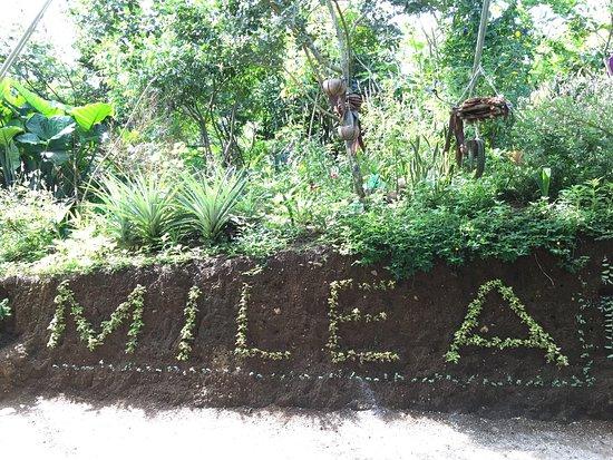 Milea Bee Farm