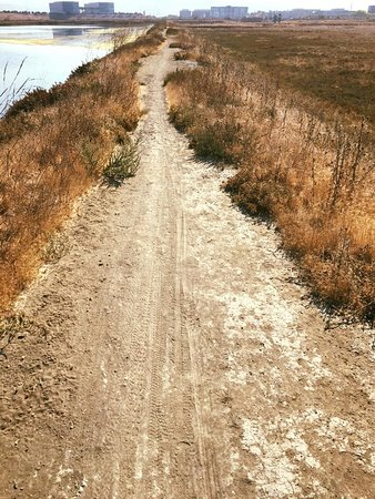 Sunnyvale, CA: off the beaten track of paved trails are an option