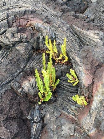 Waikoloa, Hawaje: photo1.jpg