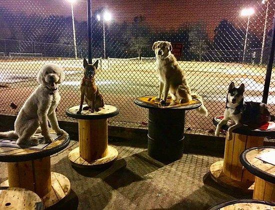 Jackson Bark - Dog Park