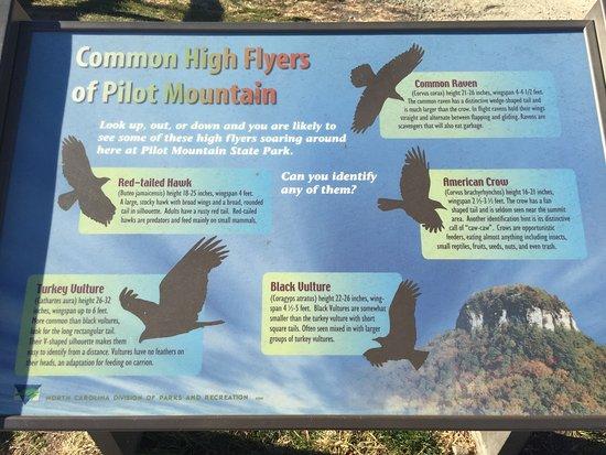 Mount Airy, NC: photo1.jpg