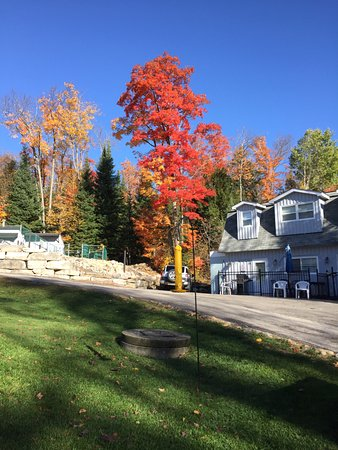 Lakeview Motel: Fall colours