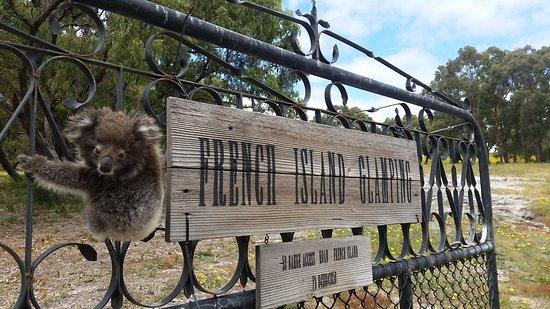 French Island, Avustralya: Meet the local wildlife