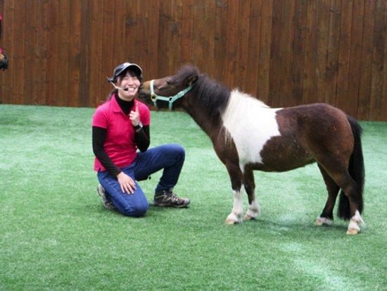 pony show 苫小牧市 ノーザン ホースパークの写真 トリップアドバイザー