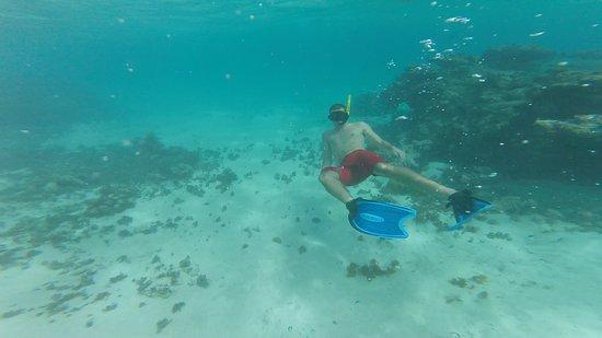 Jolly Harbour, Antigua: My husband Joe snorkeling at Cades Reef