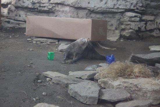 Newport, KY: otter exhibit