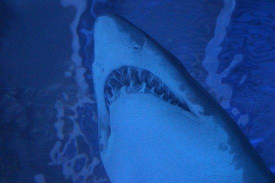 Newport, KY: shark