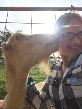 Kula, Hawái: A Senior in High School loves the Goat dairy farm and goat cheese, too!!