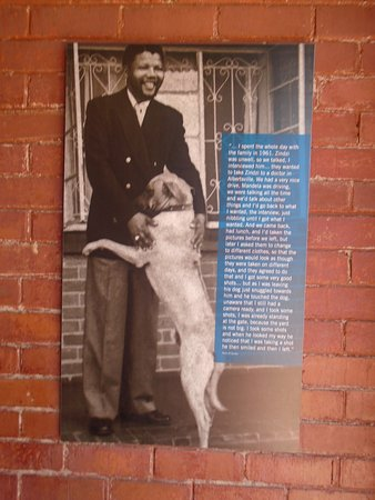 Johanesburgo, Sudáfrica: Mandela House-a man and his dog