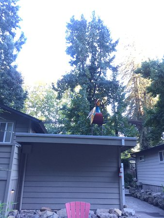 Guerneville, Kalifornia: View by the fire Pit of the Rooster over the Laundry area