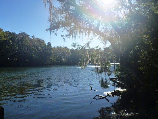 Homosassa Springs, فلوريدا: So pretty!