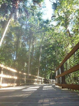 Homosassa Springs, فلوريدا: Great pathways with plenty of shade.