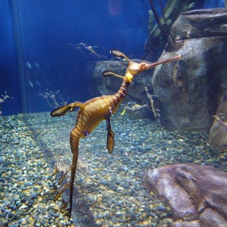 Dragon fish picture of georgia aquarium atlanta for Georgia freshwater fish