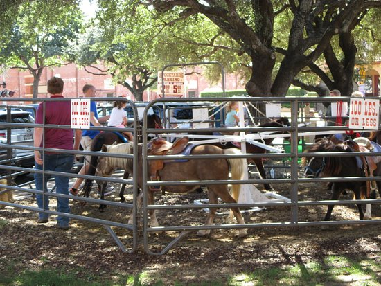 merry go round with real ponies picture of fort worth stockyards