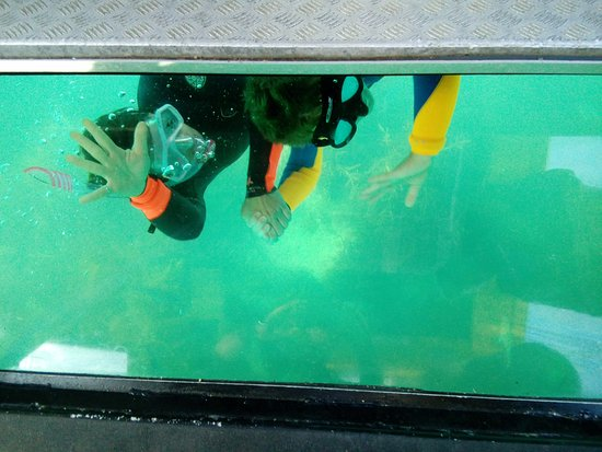 Whitianga, New Zealand: Snorkeling-- waving to our fellow boat passengers through the glass