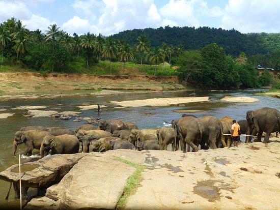 Pinnawala, Sri Lanka: beautiful elephants
