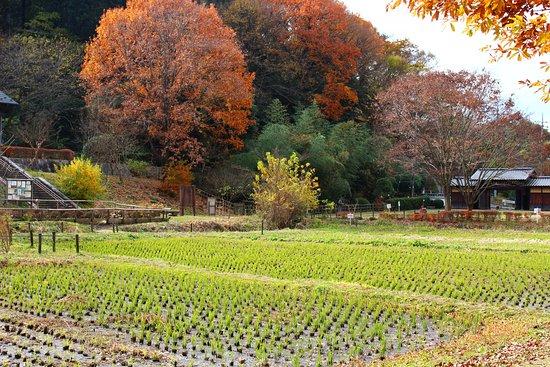 Zama Yatoyama Park