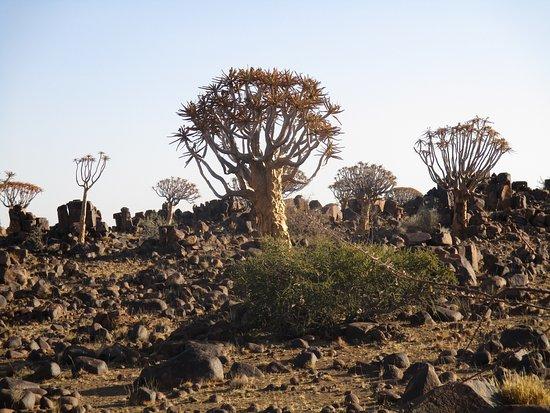Keetmanshoop, Namibia: Köcherbäume im Bush Camp