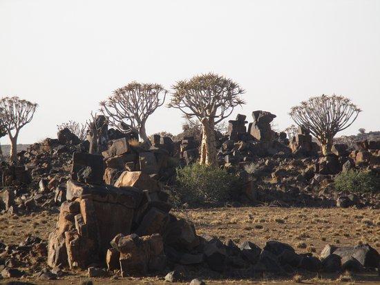 Keetmanshoop, Namibia: Köcherbaumwald