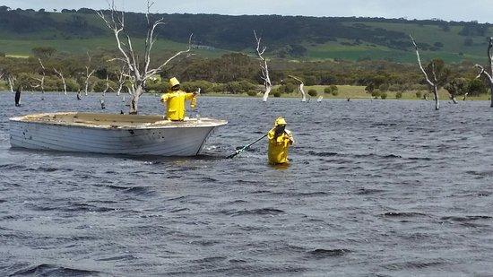คิงส์คอต, ออสเตรเลีย: Photos of the Lagoon when it full