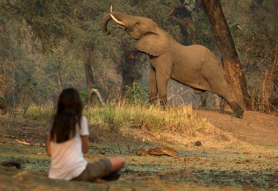 Fourways, Sudáfrica: Mana Pools Photo Safari