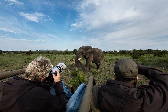 Fourways, Sudáfrica: Sabi Sabi Photo Safari