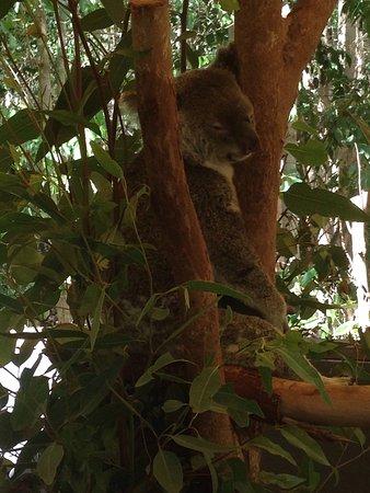 Palm Cove, أستراليا: Hartley's