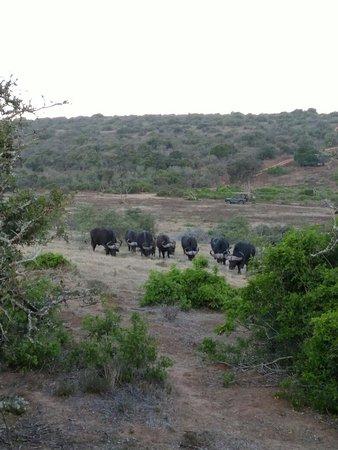 Addo Elephant National Park, Sudáfrica: IMG_20161206_184332343_large.jpg