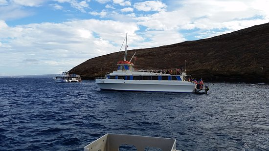 Wailuku, HI: lots of fish to see with clean water