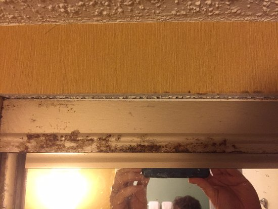 Galloway, NJ: Corrosion or mold over the mirror... how pleasant!