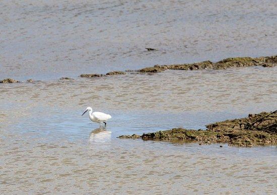 Selsey, UK: Egret wading
