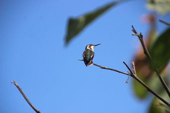 Ayampe, Ecuador: Avistamiento de aves en el hotel, es su hogar.