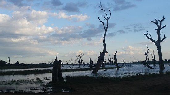 Uda Walawe National Park, ศรีลังกา: 20161205_165020_large.jpg