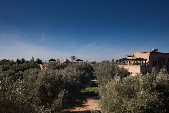 Peacock Pavilions: Olive grove
