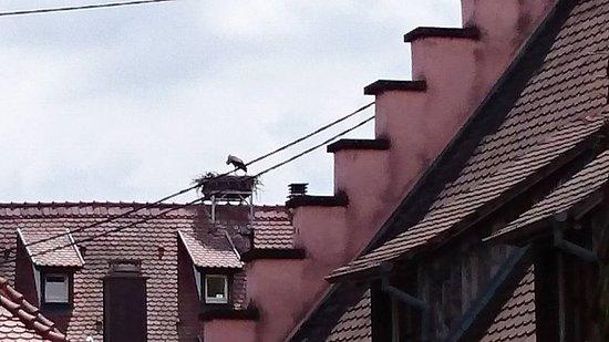 Turckheim, France : 部屋からコウノトリの巣が見えました。