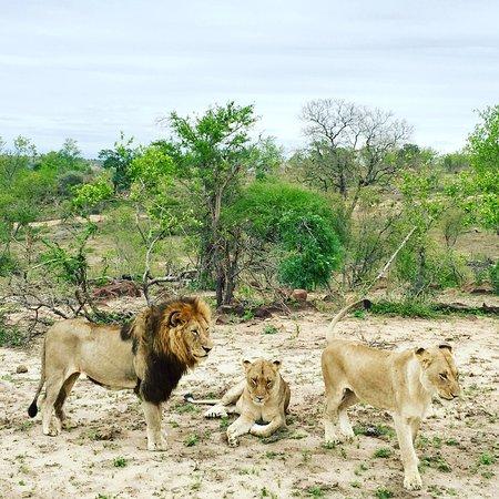 Mala Mala Private Game Reserve, South Africa: photo0.jpg