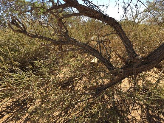 Sesriem, Namibia: Schmetterlinge im Busch