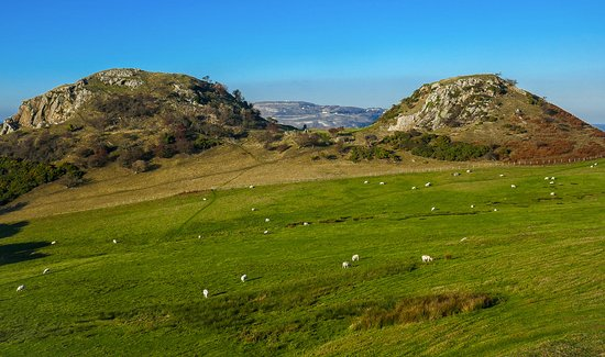 Deganwy, UK: Access field with sheep