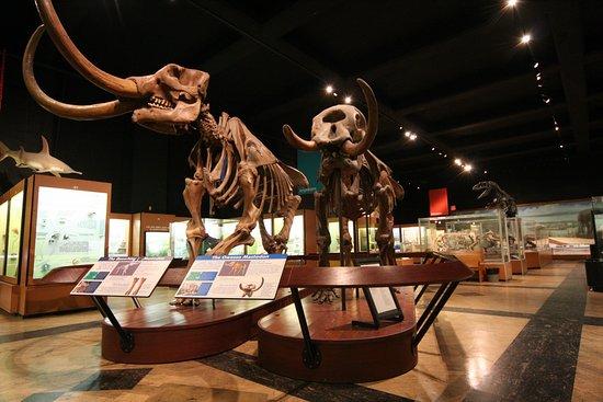 Анн-Арбор, Мичиган: The only mastodon couple on display worldwide!