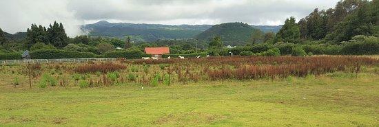 Bourg-Murat, Réunion: vu du resto