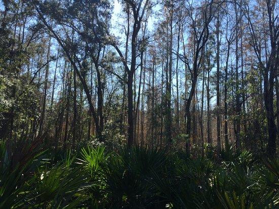 New Port Richey, FL: Trails
