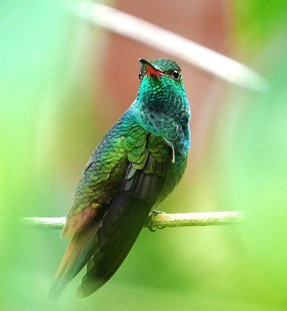 Martina's Place Hostel : Hummingbird in our hostel garden
