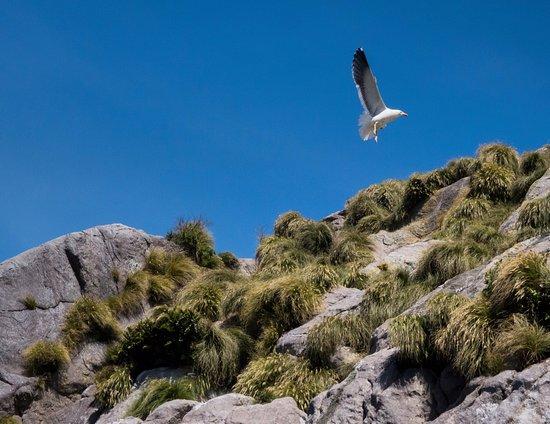 Manapouri, Nova Zelândia: Nature