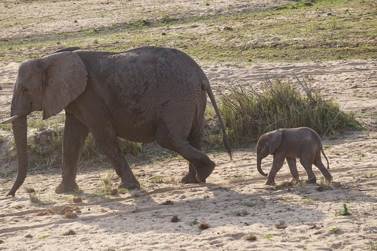 Mala Mala Private Game Reserve, Sudáfrica: An Elephant-Mama with her offspring
