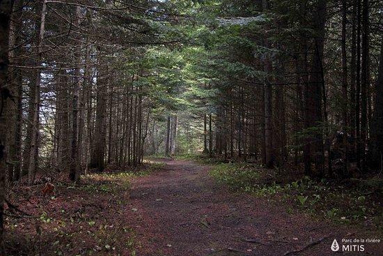Sainte-Flavie, Kanada: Sentier